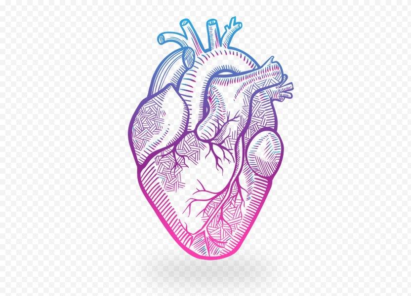 Heart Anatomy Drawing - Watercolor PNG