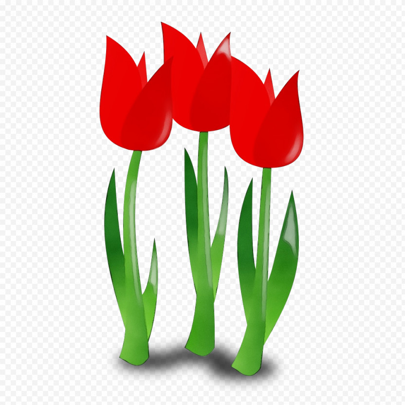 Tulip Flower Red Plant Petal PNG