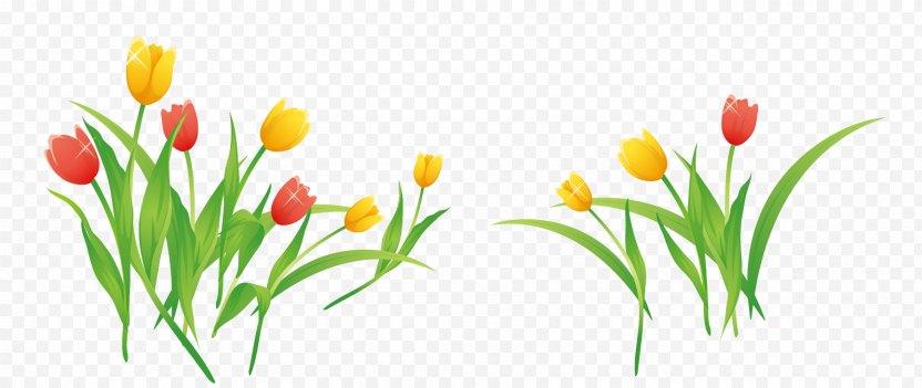 Tulip Flower Clip Art PNG