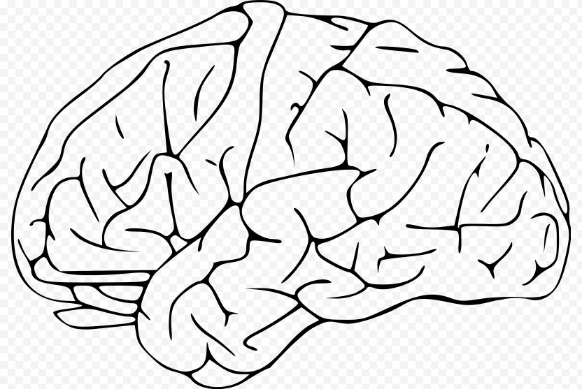 Outline Of The Human Brain Clip Art - Silhouette PNG