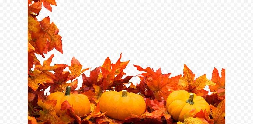 Autumn Harvest Festival Stock Photography Clip Art PNG
