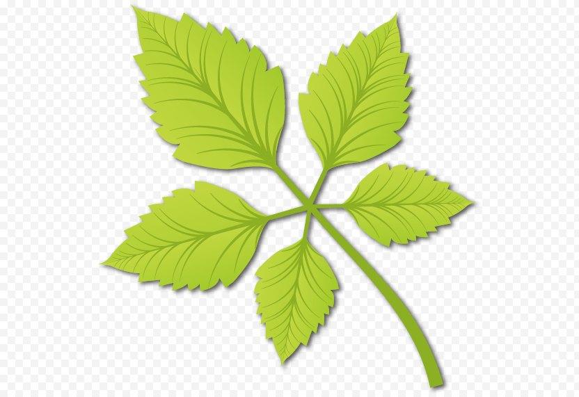Leaf Euclidean Vector - Designer PNG