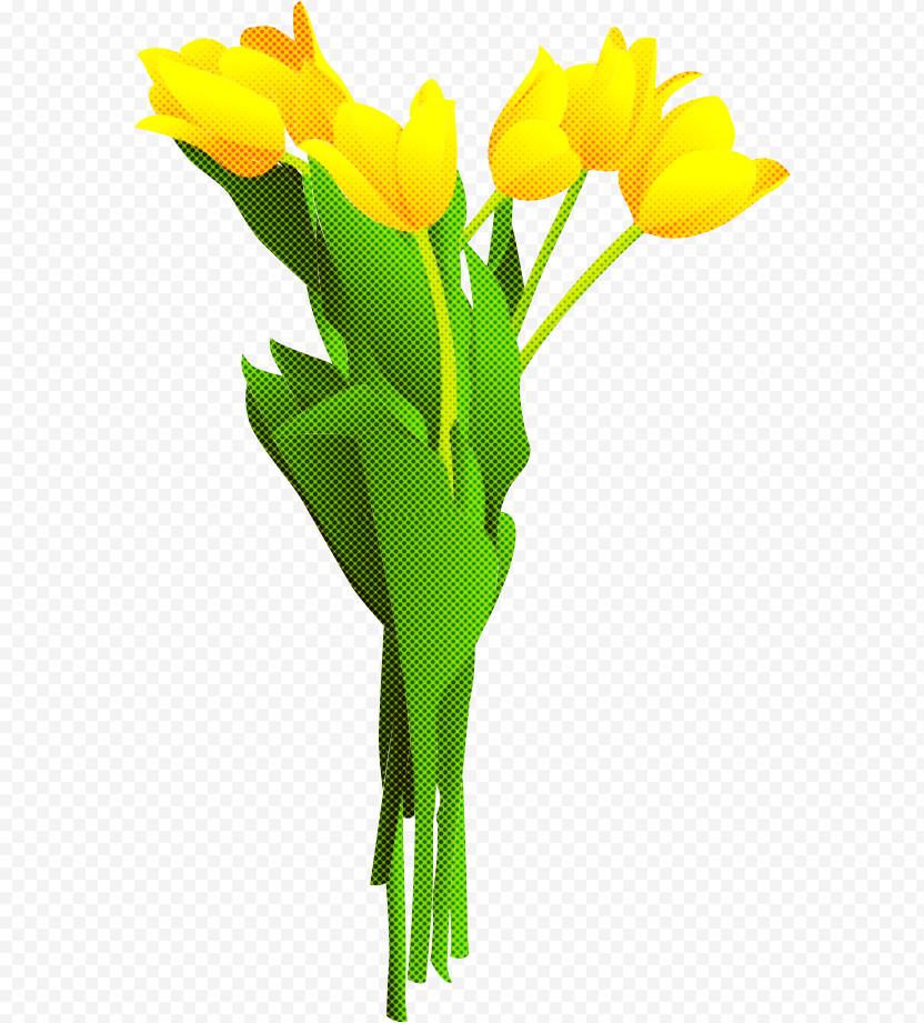 Tulip Bouquet Flower Bouquet Flower Bunch PNG