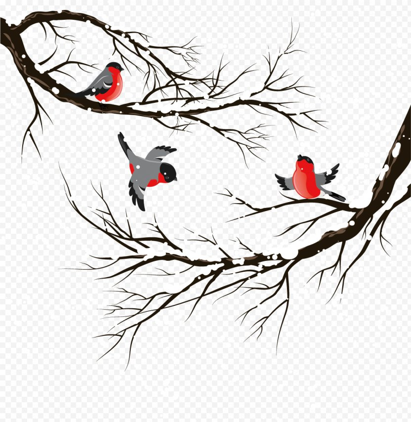 Bird Winter Illustration - Feather PNG
